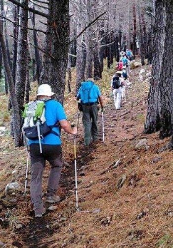 NaturArte Trekking Urbano | verso la Pineta|PNAL|Brienza