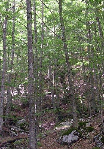 "NaturArte trekking | Sentiero ""Natura Ingegno"" Fosso Arcangelo"