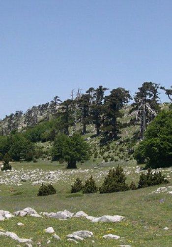 NaturArte Trekking |Santuario Madonna di Pollino- Serretta della Porticella